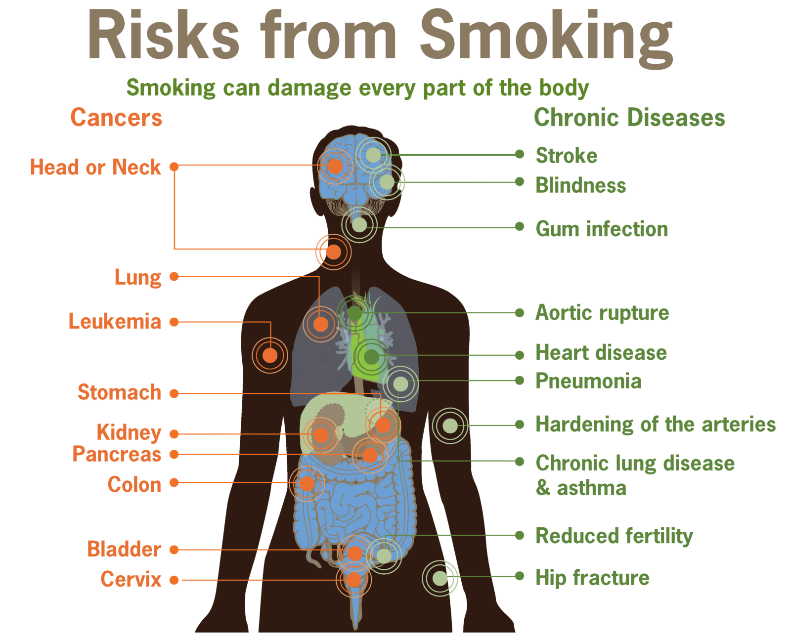 effects of smoking on the body southeast radiation oncology effects of smoking on the body southeast radiation oncology group p a sero treat cancer